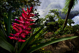 A Flowering Bromeliad and Rainforest Waterfalls in Iguazu National Park Photographic Print by Mattias Klum