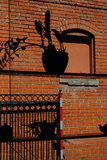 A Plant and Teapot Silhouetted Against an Old Red Brick Building in Westport, Kansas City Photographic Print by Paul Damien