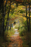 A Path Through a Forest Covered by Fallen Leaves in Autumn Photographic Print by Robbie George