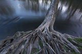 Exposed Roots of a Sycamore Tree at the Brandywine River Museum Photographic Print by Michael Melford