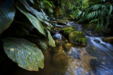 A Rainforest Stream in Tijuca National Park Photographic Print by Mattias Klum