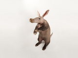 An Aardvark, Orycteropus Afer Photographic Print by Joel Sartore