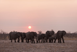 A Herd of African Elephants, Loxodonta Africana, at Sunset Fotografisk tryk af Sergio Pitamitz