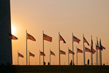 American Flags Fly around the Base of the Washington Monument Photographic Print by Vickie Lewis