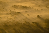 Fog at Sunrise in the Florida Wildlife Corridor Opportunity Area Photographic Print by Carlton Ward