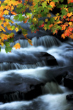 A Waterfall Cascading Past Maple Trees, Acer Species, in Autumn Colors Photographie par Robbie George