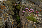 Moss, Lichen and Flowers by the Sea Photographic Print by Medford Taylor