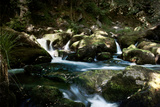 Golitha Falls I Photographic Print by Tim Kahane