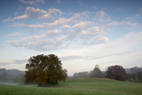 A Lone Sycamore Tree Emerges from the Mist at Woodlawn's Upland Meadows and Woods Photographic Print by Michael Melford