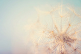 Dandelion Dreams Photographic Print by Laura Evans
