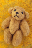 Teddy Photographic Print by Den Reader
