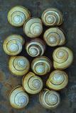 Thirteen Shells Photographic Print by Den Reader