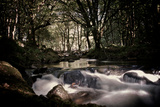 Golitha Falls Iii Photographic Print by Tim Kahane