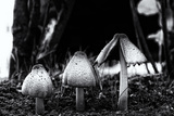The Mushrooms Photographic Print by Henriette Lund Mackey