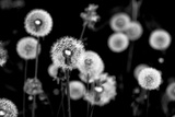Whispers of Spring Fotografie-Druck von Henriette Lund Mackey