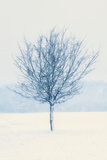 Wind and Snow Photographic Print by David Baker
