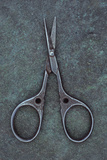 Sewing Scissors Photographic Print by Den Reader