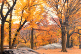 Foggy October Afternoon in Central Park, Manhattan, New York Cit Photographie par Sabine Jacobs