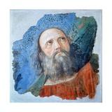 Head of an Apostle (Detached Fresco) Arte por Melozzo degli Ambrogi