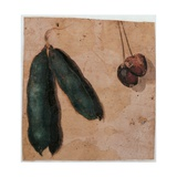 Botanical Drawings: Two Pea Pods and Two Cherries, C.1550-99 Prints