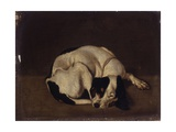 Sleeping Dog Prints by Arcangelo Resani