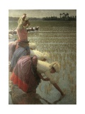 Women Rice Harvesters in the Paddy Field Art by Angelo Morbelli