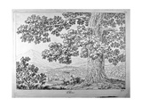 Tree, Etching from Principles for Learning to Draw the Natural Landscape, 1802 Poster von Philippe Hackert