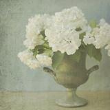 Weiße Hortensien Giclée-Druck von Shana Rae