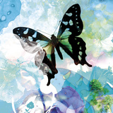 Emerald Butterfly I Giclee Print by Ingrid Van Den Brand