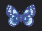 Summer Butterfly I Giclee Print by Sophie Golaz