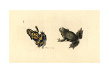European Fire-Bellied Toad, Bombina Bombina Giclee Print by Richard Polydore Nodder