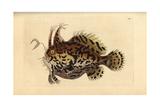 Sargassumfish, Histrio Histrio Giclee Print