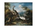 Fight Between Herons Prints by Angiolo Maria Crivelli (Crivellone)