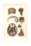 Sinuses in Skull, Humerus and Vertebrae Giclée-Druck