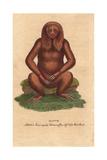 Three-Toed Sloth, Bradypus Tridactylus Giclee Print