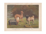 Yorkshire Terrier, Italian Greyhound and Pug Shown with Tennis Racquet and Balls Giclee Print