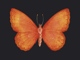 Summer Butterfly V Giclee Print by Sophie Golaz
