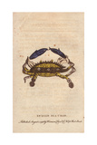 Indian Sea Crab Giclee Print