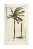 Coconut Palm Giclee Print