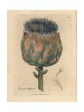 Blue and Purple Flowered Artichoke, Cynara Scolymus Giclée-Druck von James Sowerby
