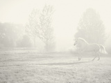 Niebla Blanco Giclee Print by Shana Rae
