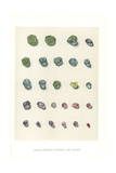 Rough Montana Sapphires and Rubies Giclee Print