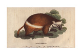 Wolverene or GluttonGulo Gulo (Ursus Luscus) Giclee Print
