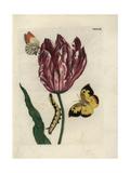 King Ludwig Tulip Giclee Print