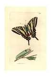 Zebra Swallowtail, Eurytides Marcellus Giclee Print by Richard Polydore Nodder