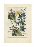 Bellflower Giclee Print