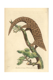 Five-Toed Manis, Chinese Pangolin, or Scaly Anteater, Manis Pentadactyla Endangered Giclee Print