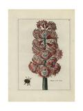 Hyacinth, Marquis De La Ceste Giclee Print