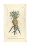 Pineapple Giclee Print