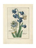 Hyacinth and Love in a Mist Giclee Print